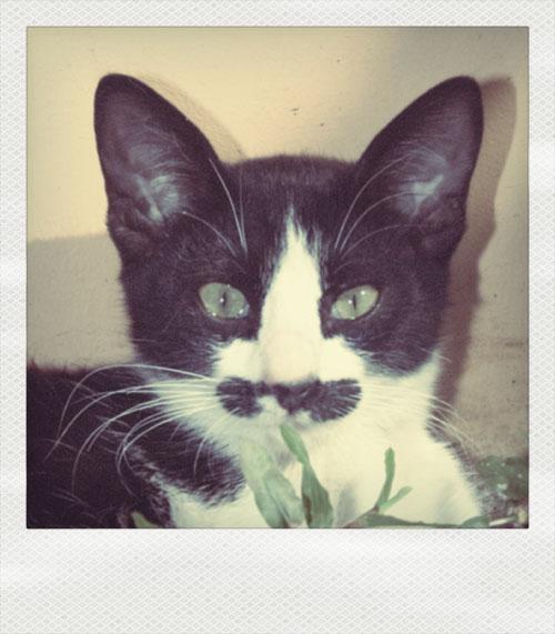 el musta
